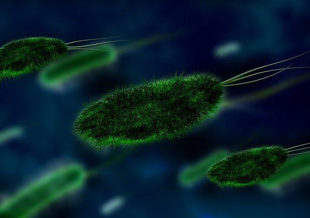 Bakteria E. coli – jak można się zarazić?